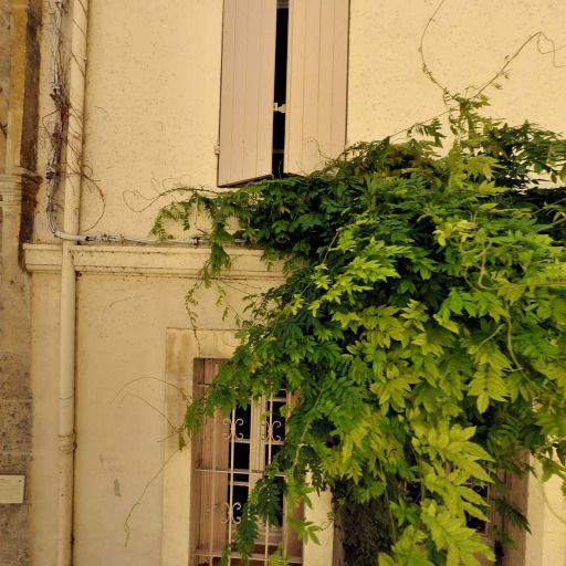 Abbaye Saint-Césaire - Attraction touristique - Arles
